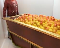 Porteur d'oranges
