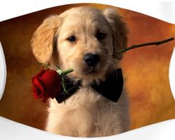 Labrador rose